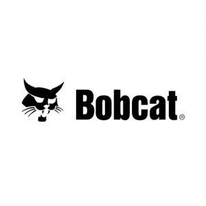 Senile Bobcat